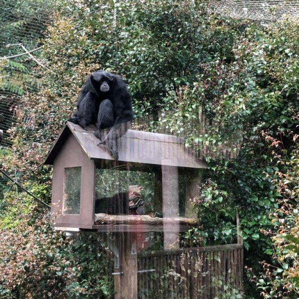 Kelston-Primary-Zoo-Trip-2019 (5).jpg