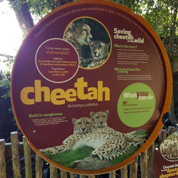 Kelston-Primary-Zoo-Trip-2019 (82).jpg