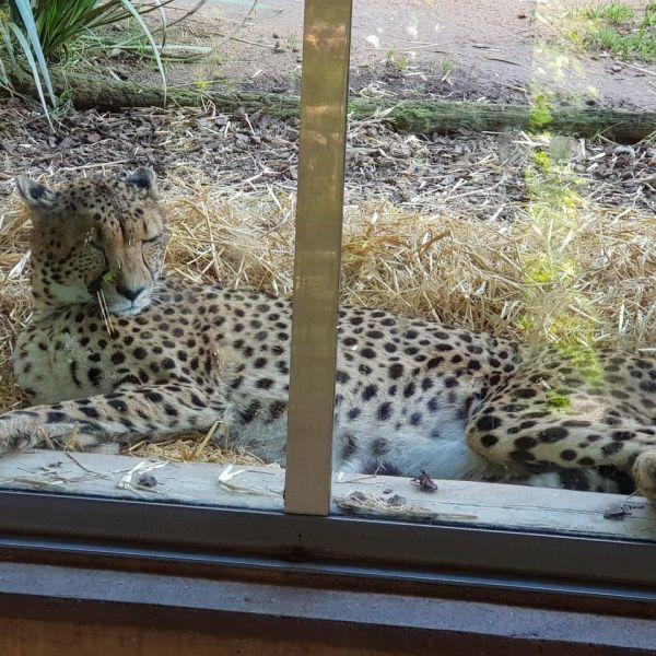 Kelston-Primary-Zoo-Trip-2019 (81).jpg