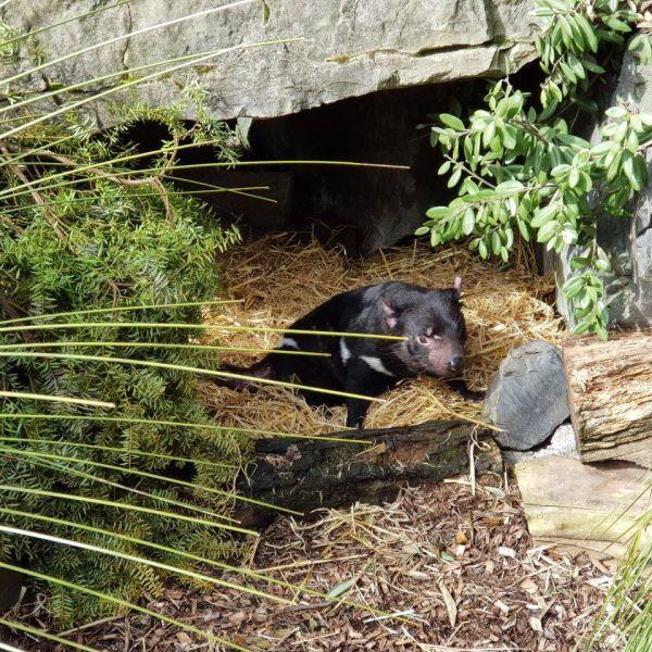 Kelston-Primary-Zoo-Trip-2019 (209).jpg