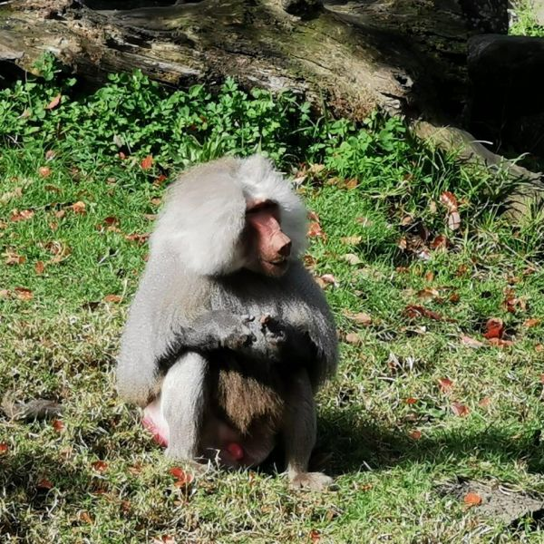 Kelston-Primary-Zoo-Trip-2019 (29).jpg