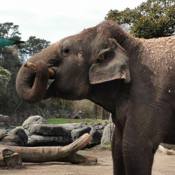 Kelston-Primary-Zoo-Trip-2019 (37).jpg