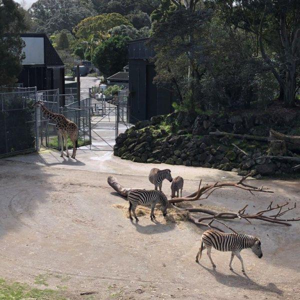 Kelston-Primary-Zoo-Trip-2019 (11).jpg