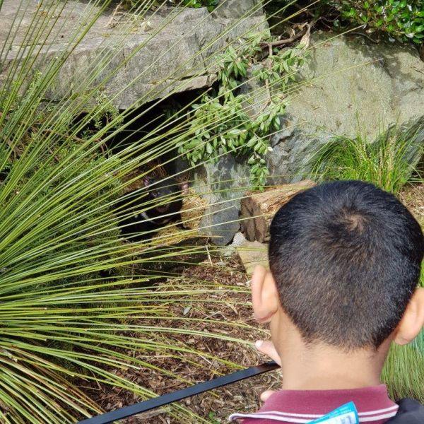 Kelston-Primary-Zoo-Trip-2019 (208).jpg