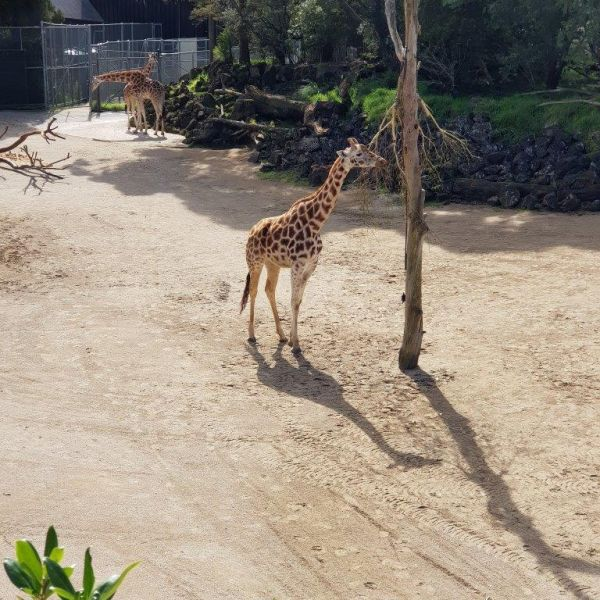 Kelston-Primary-Zoo-Trip-2019 (89).jpg