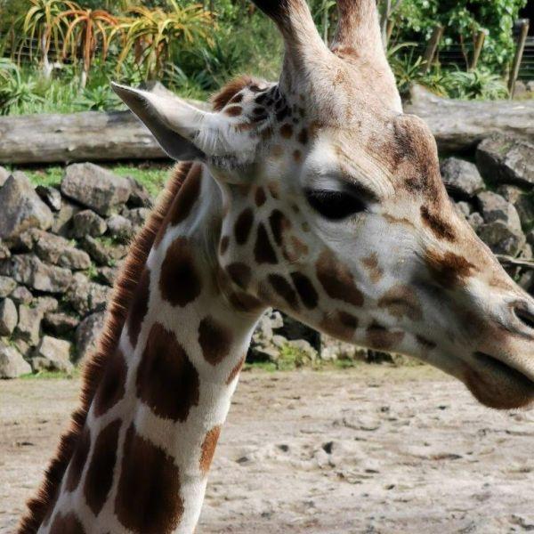 Kelston-Primary-Zoo-Trip-2019 (48).jpg