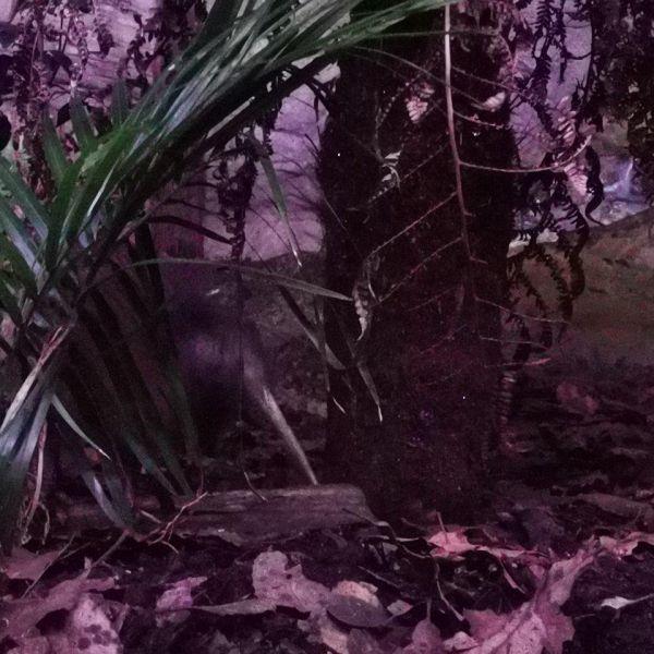 Kelston-Primary-Zoo-Trip-2019 (118).jpg