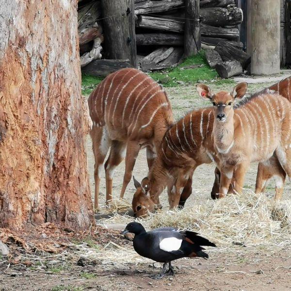 Kelston-Primary-Zoo-Trip-2019 (40).jpg