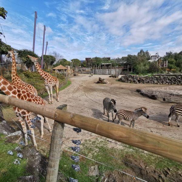 Kelston-Primary-Zoo-Trip-2019 (51).jpg
