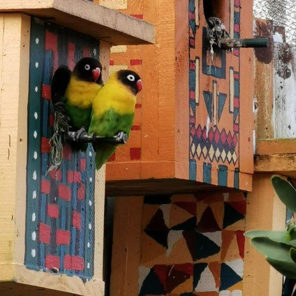 Kelston-Primary-Zoo-Trip-2019 (53).jpg