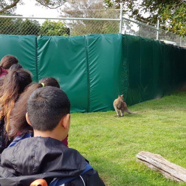 Kelston-Primary-Zoo-Trip-2019 (235).jpg