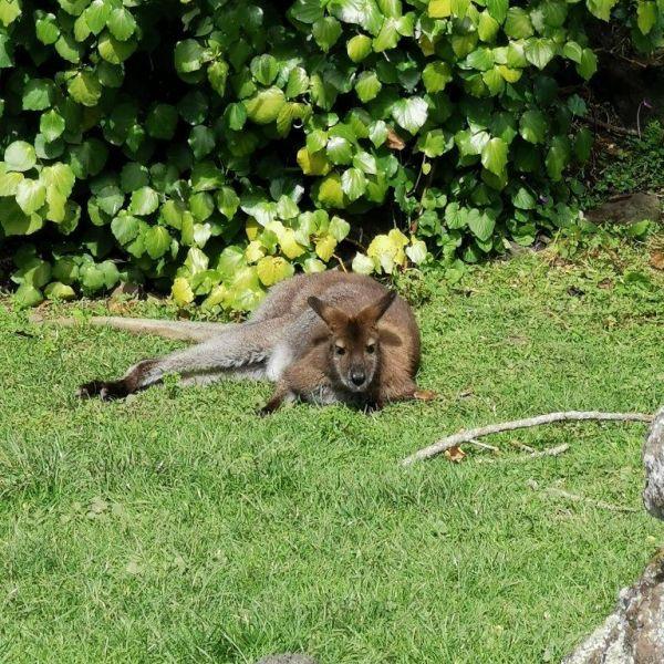 Kelston-Primary-Zoo-Trip-2019 (67).jpg