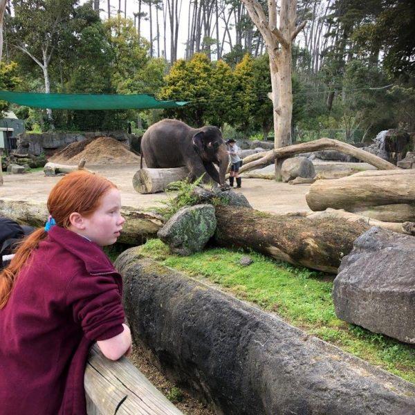 Kelston-Primary-Zoo-Trip-2019 (21).jpg