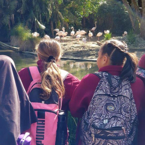 Kelston-Primary-Zoo-Trip-2019 (84).jpg