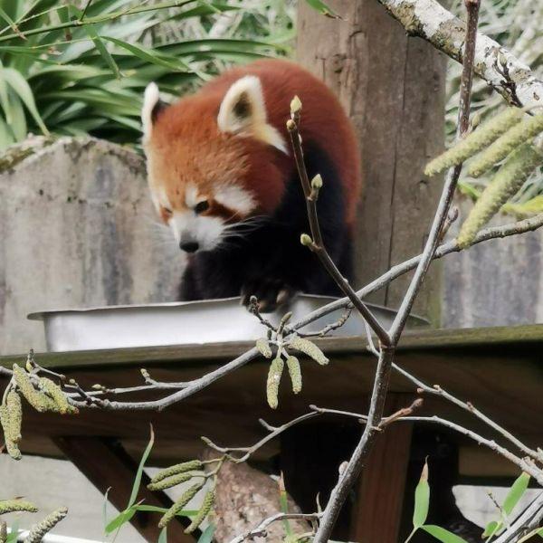 Kelston-Primary-Zoo-Trip-2019 (111).jpg