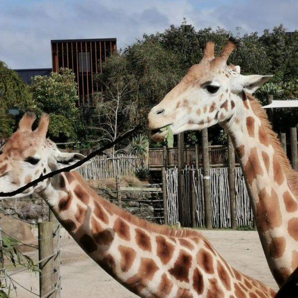 Kelston-Primary-Zoo-Trip-2019 (45).jpg