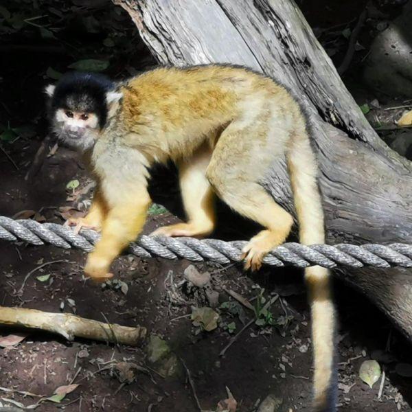 Kelston-Primary-Zoo-Trip-2019 (106).jpg