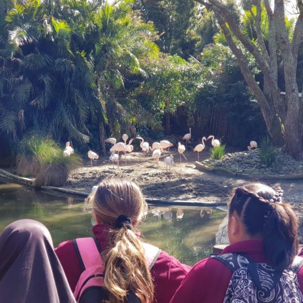 Kelston-Primary-Zoo-Trip-2019 (83).jpg