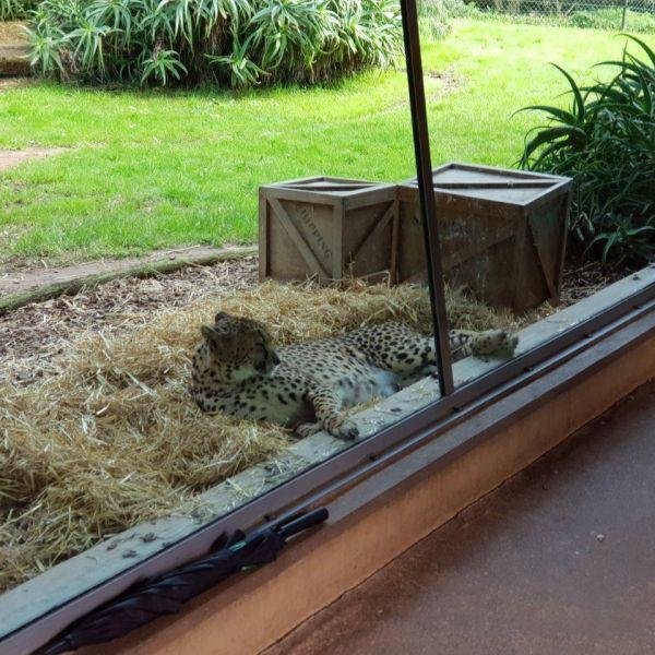 Kelston-Primary-Zoo-Trip-2019 (255).jpg
