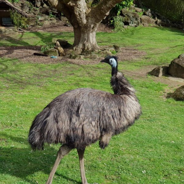 Kelston-Primary-Zoo-Trip-2019 (239).jpg
