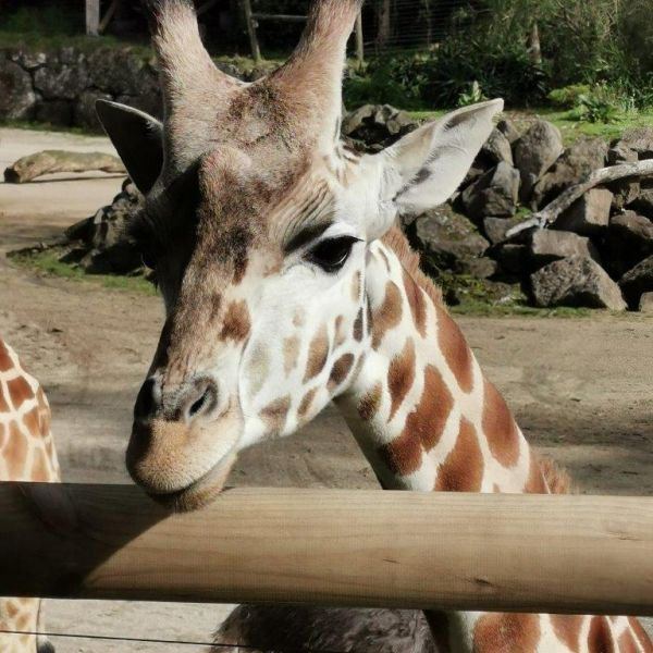 Kelston-Primary-Zoo-Trip-2019 (46).jpg