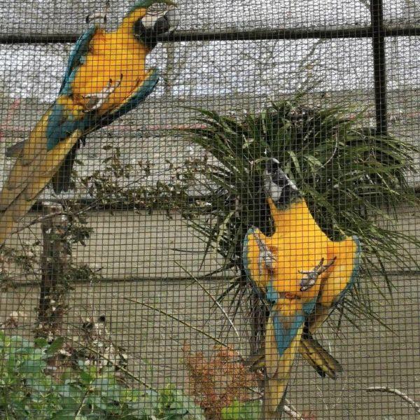 Kelston-Primary-Zoo-Trip-2019 (79).jpg