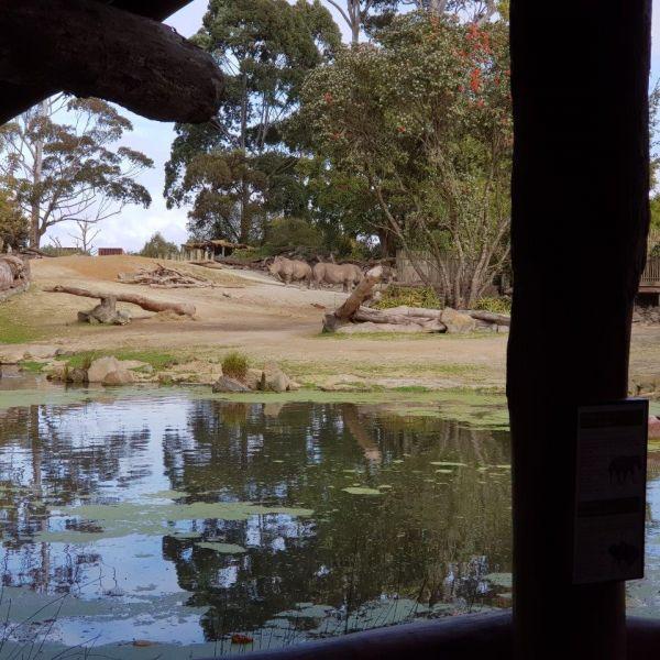 Kelston-Primary-Zoo-Trip-2019 (252).jpg