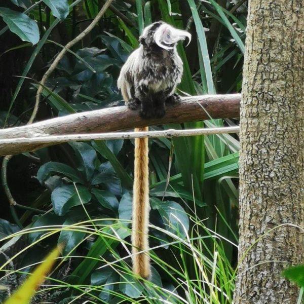 Kelston-Primary-Zoo-Trip-2019 (77).jpg