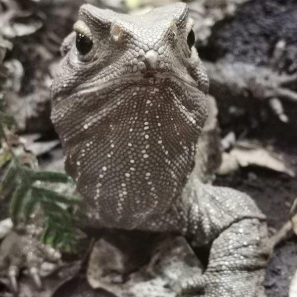 Kelston-Primary-Zoo-Trip-2019 (116).jpg