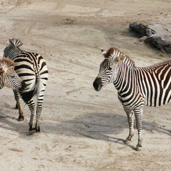 Kelston-Primary-Zoo-Trip-2019 (50).jpg