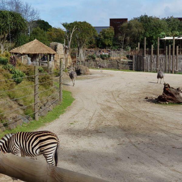 Kelston-Primary-Zoo-Trip-2019 (86).jpg
