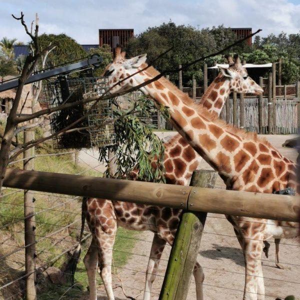 Kelston-Primary-Zoo-Trip-2019 (44).jpg