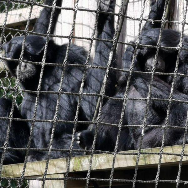 Kelston-Primary-Zoo-Trip-2019 (102).jpg