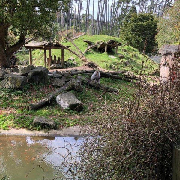 Kelston-Primary-Zoo-Trip-2019 (24).jpg