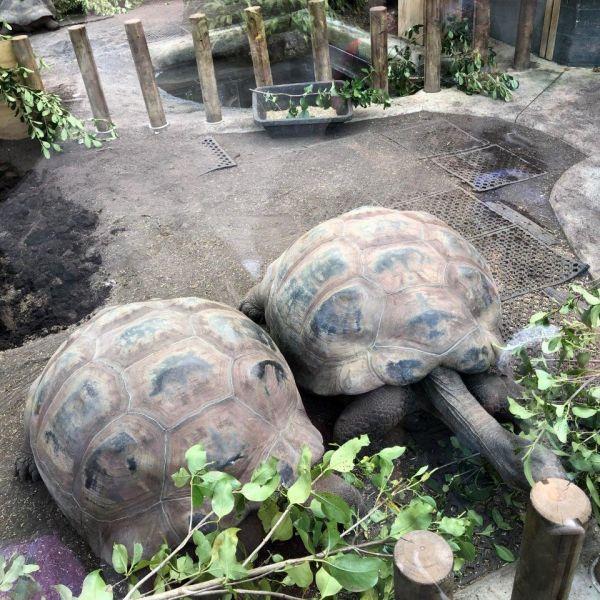 Kelston-Primary-Zoo-Trip-2019 (7).jpg