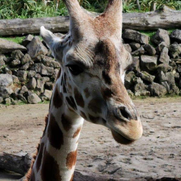 Kelston-Primary-Zoo-Trip-2019 (47).jpg